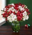 Christmas Flowers: Peppermint Joy Double Bouquet w/ Vase